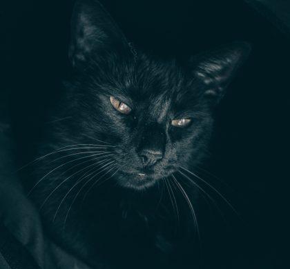 Brilliant Black Cats for Black Cat Awareness Month